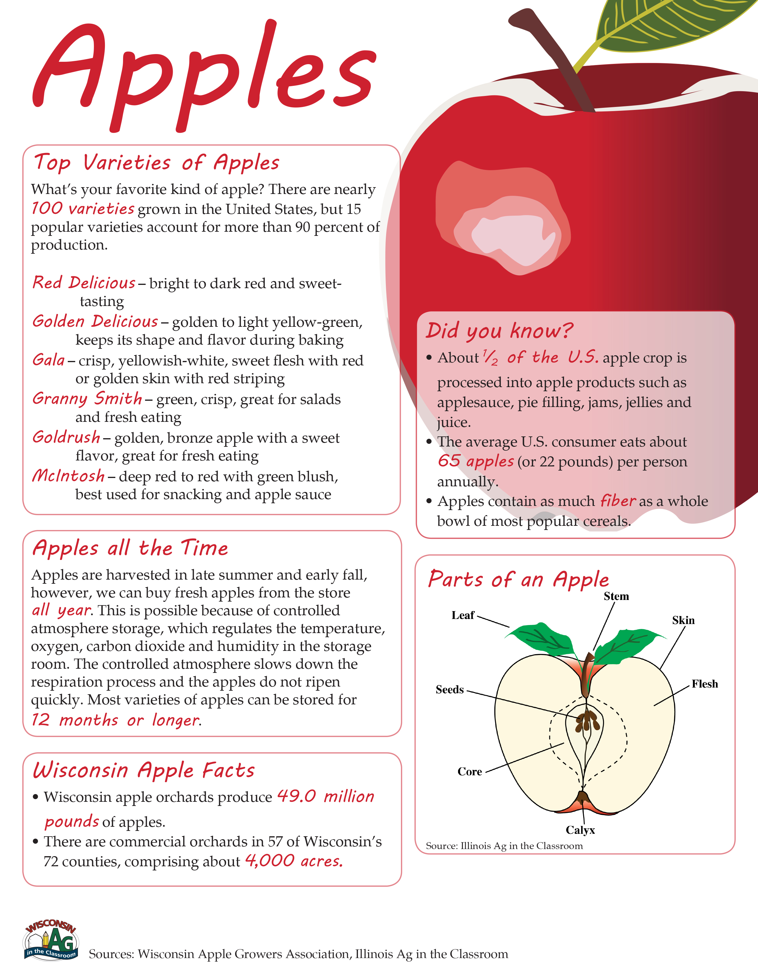 Apple Fact Sheet