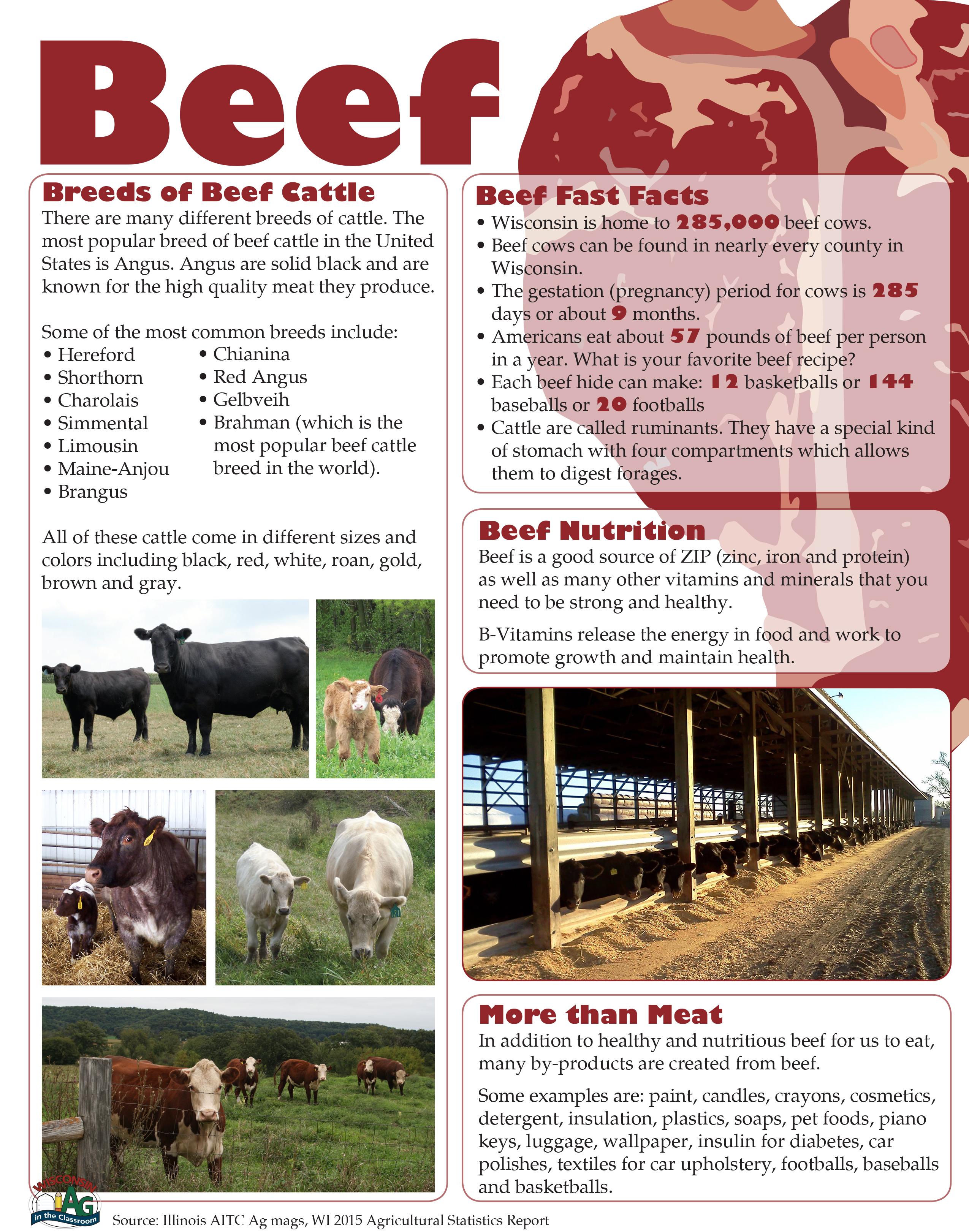 Beef Fact Sheet