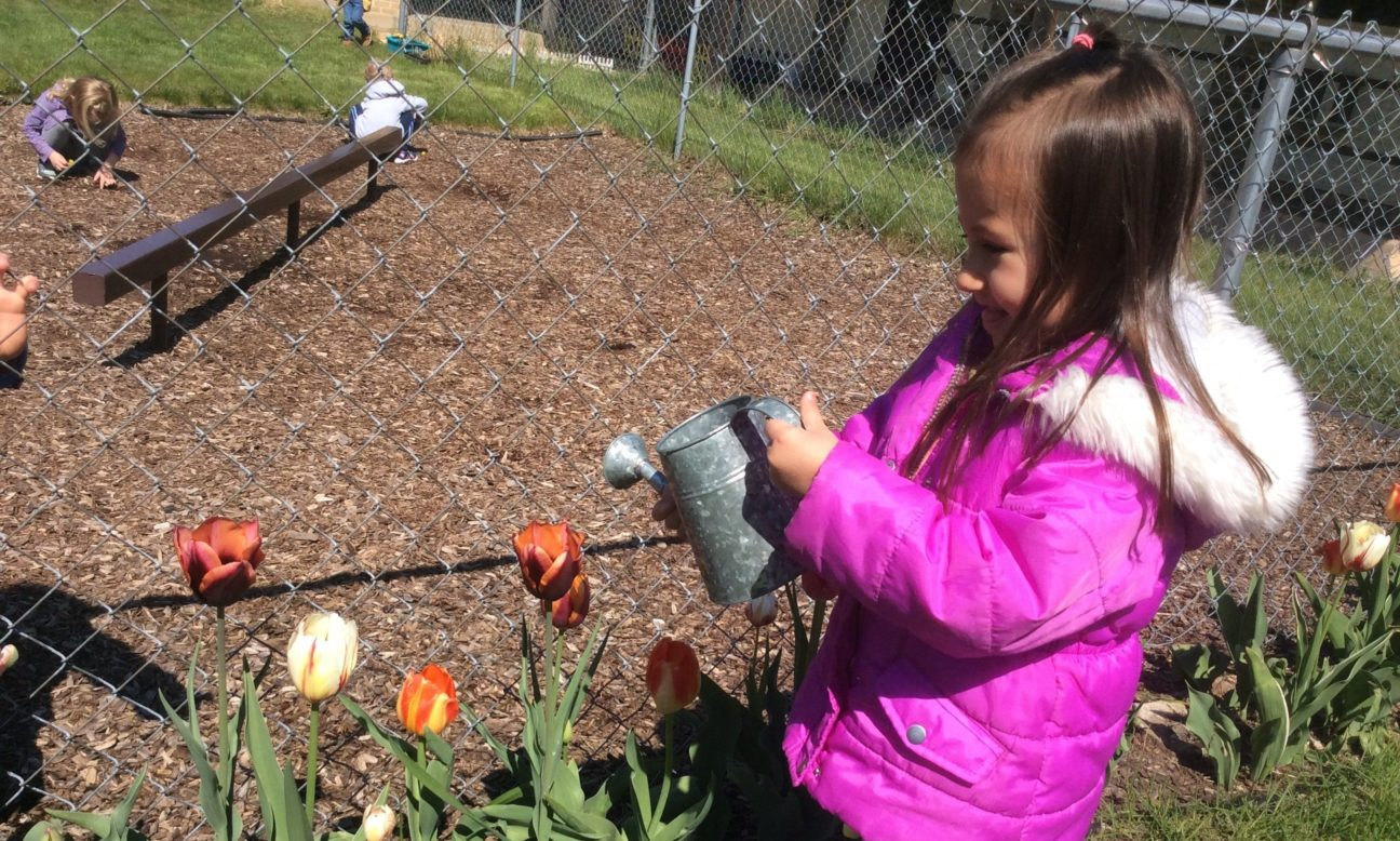 Little girl watering tulips