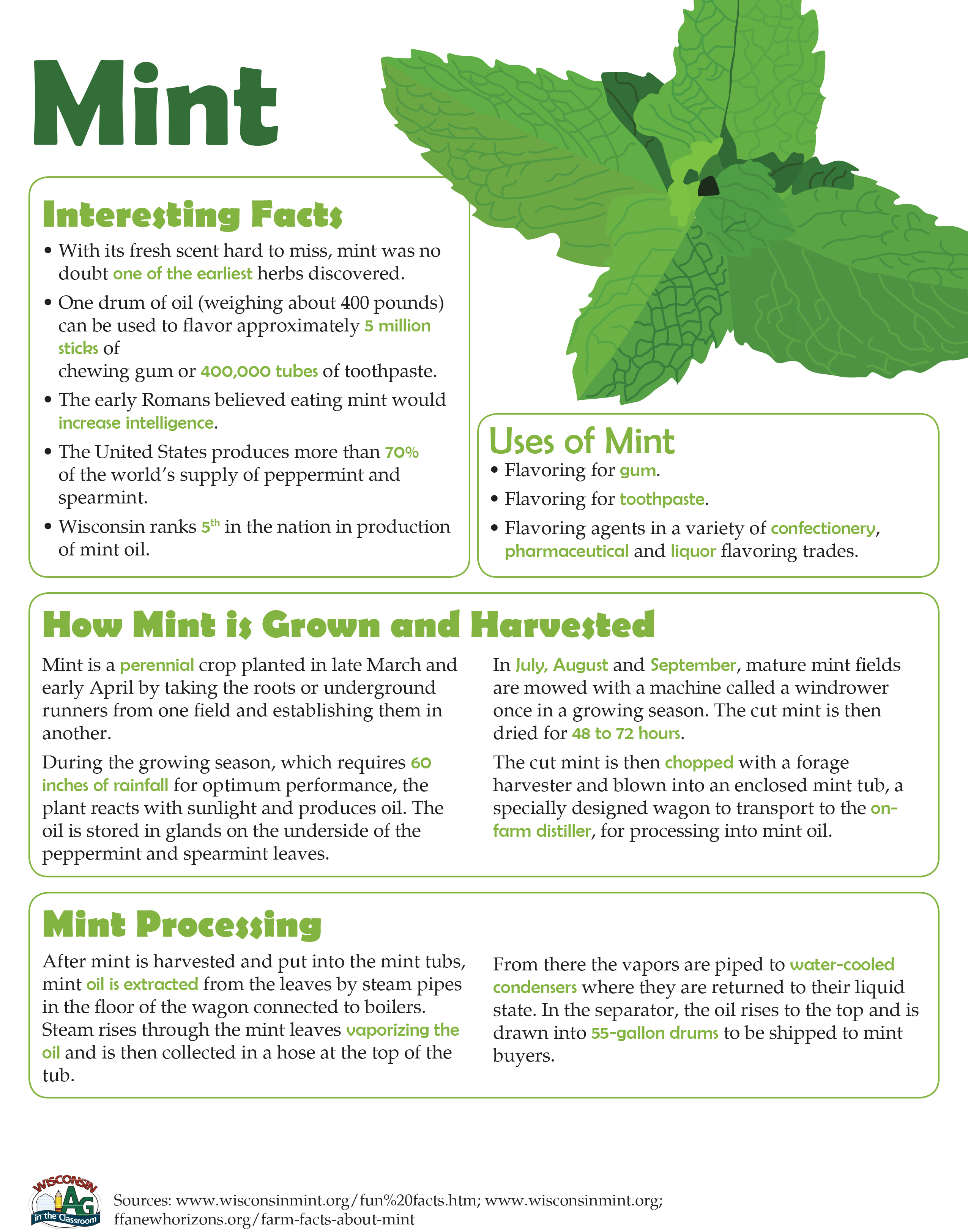 Mint Fact Sheet