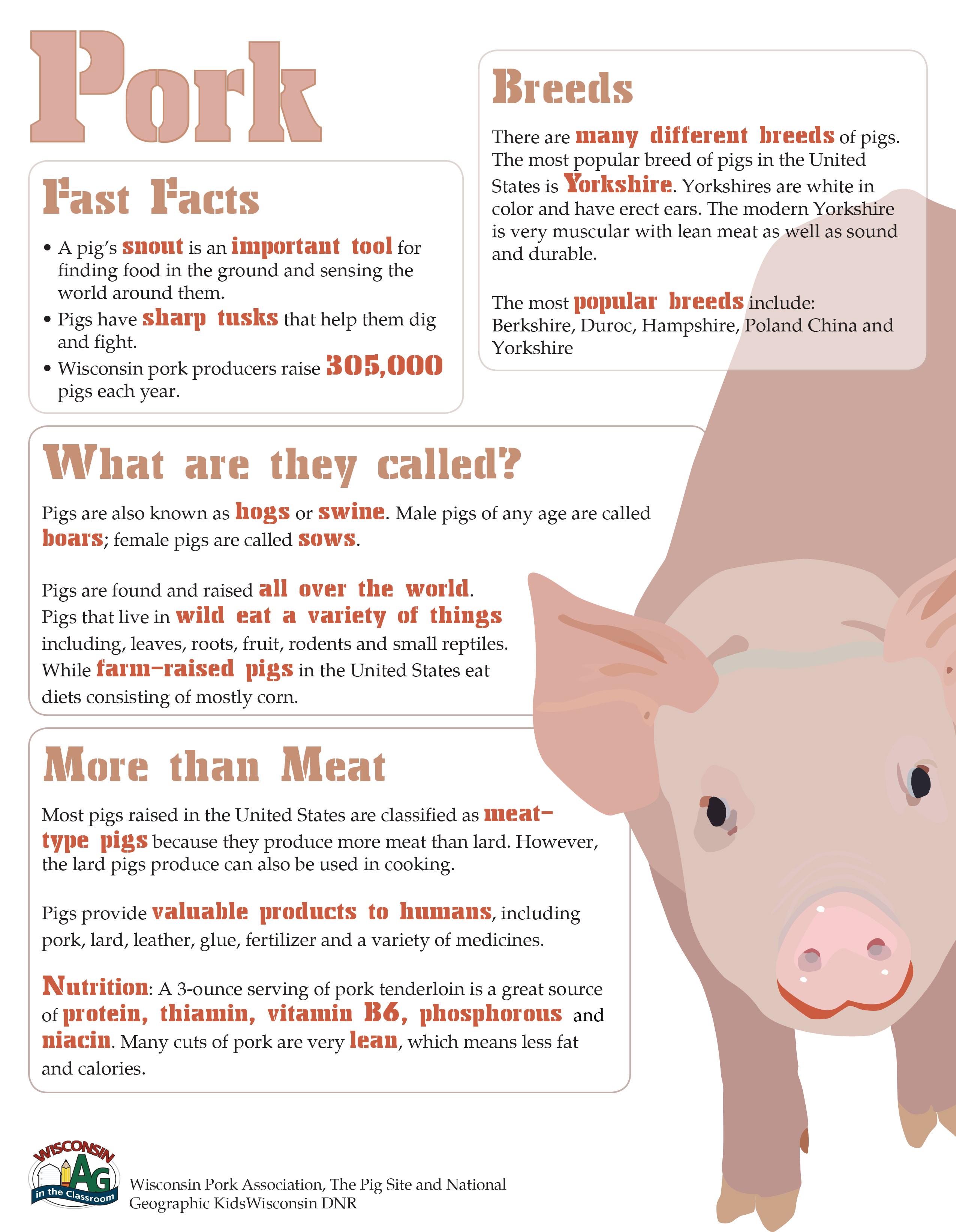 Pig Fact Sheet
