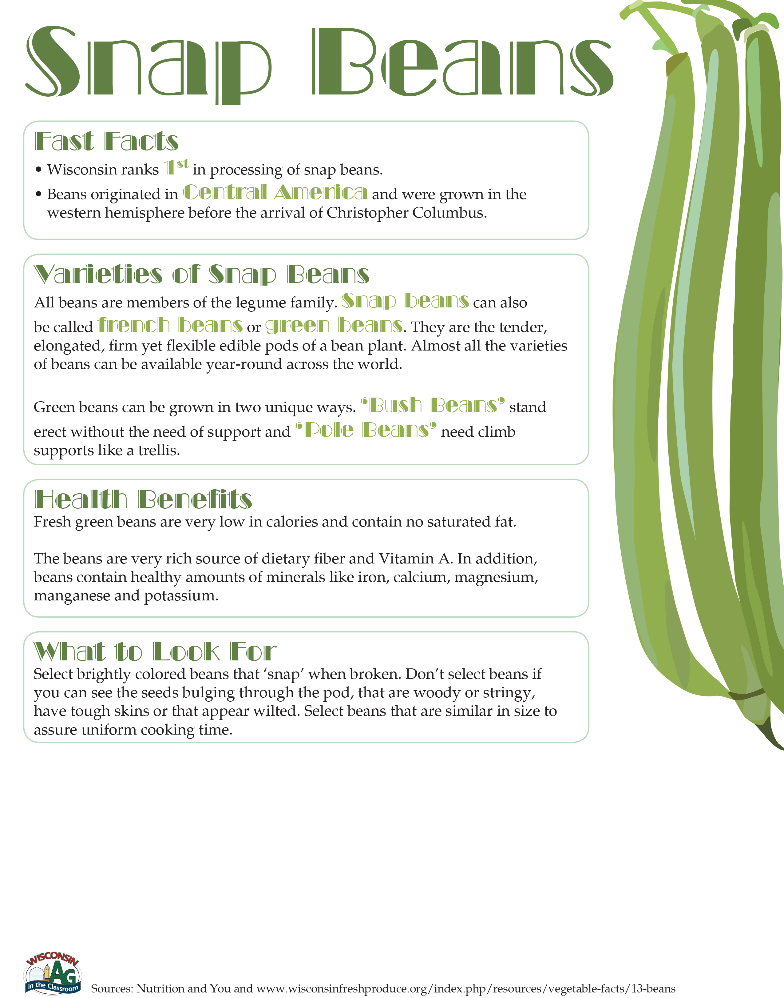 Snap Beans Fact Sheet