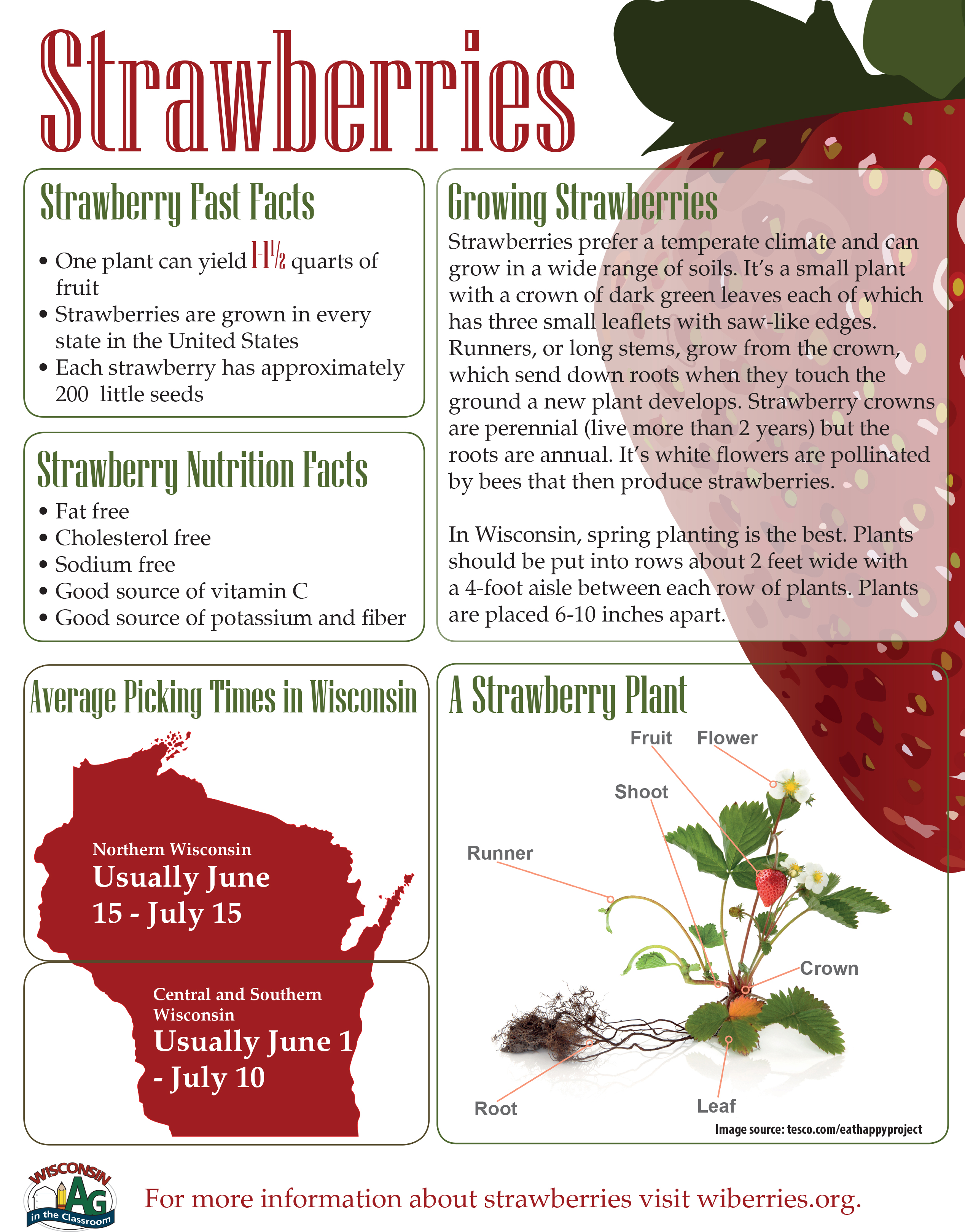 Strawberries Fact Sheet