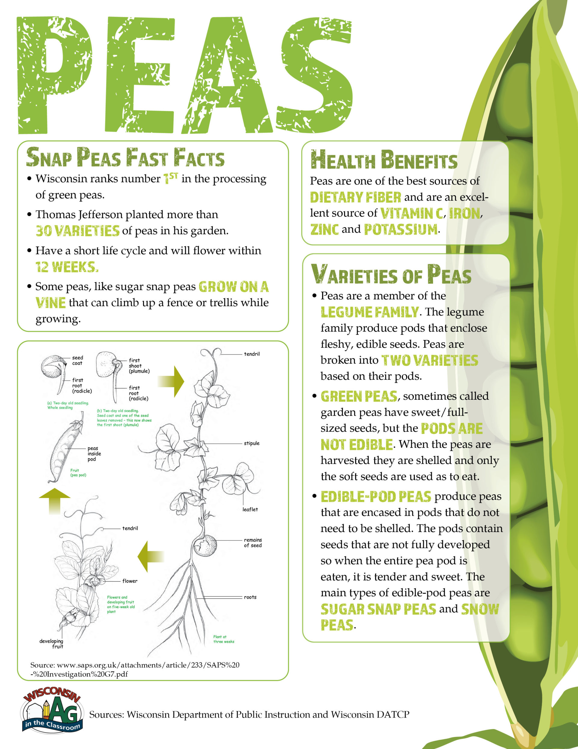 Peas Fact Sheet