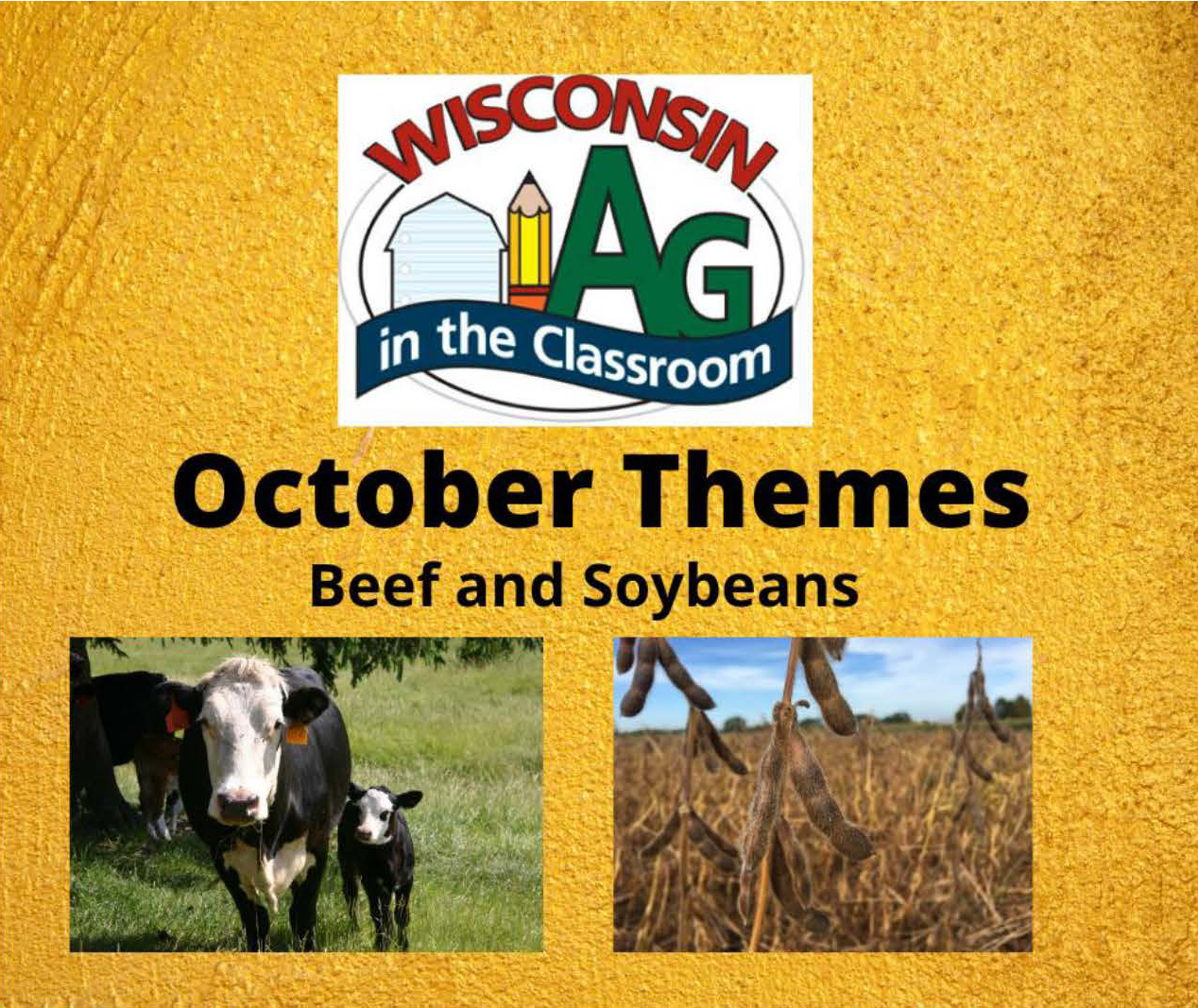 October 2020 theme - beef and soybeans